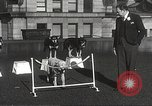 Image of dogs training for stage performance Boston Massachusetts USA, 1934, second 43 stock footage video 65675061028