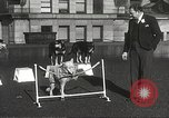 Image of dogs training for stage performance Boston Massachusetts USA, 1934, second 44 stock footage video 65675061028