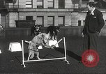 Image of dogs training for stage performance Boston Massachusetts USA, 1934, second 45 stock footage video 65675061028