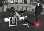 Image of dogs training for stage performance Boston Massachusetts USA, 1934, second 46 stock footage video 65675061028