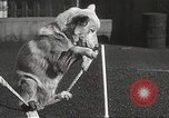 Image of dogs training for stage performance Boston Massachusetts USA, 1934, second 53 stock footage video 65675061028