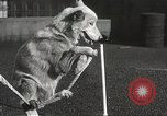 Image of dogs training for stage performance Boston Massachusetts USA, 1934, second 54 stock footage video 65675061028
