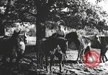Image of Hitler Madchen Germany, 1944, second 10 stock footage video 65675061192