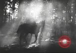 Image of Hitler Madchen Germany, 1944, second 40 stock footage video 65675061192