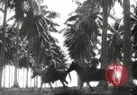 Image of marines Pacific Ocean, 1944, second 21 stock footage video 65675061531