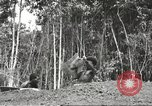 Image of 116th Engineer Battalion 41st Division soldiers New Guinea, 1943, second 52 stock footage video 65675061550