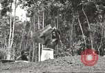 Image of 116th Engineer Battalion 41st Division soldiers New Guinea, 1943, second 53 stock footage video 65675061550