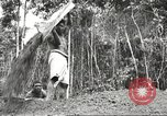 Image of 116th Engineer Battalion 41st Division soldiers New Guinea, 1943, second 55 stock footage video 65675061550