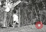 Image of 116th Engineer Battalion 41st Division soldiers New Guinea, 1943, second 56 stock footage video 65675061550