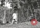 Image of 116th Engineer Battalion 41st Division soldiers New Guinea, 1943, second 57 stock footage video 65675061550