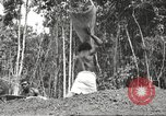 Image of 116th Engineer Battalion 41st Division soldiers New Guinea, 1943, second 58 stock footage video 65675061550