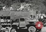Image of United States 116th Engineer Battalion 41st Division soldiers New Guinea, 1943, second 52 stock footage video 65675061551