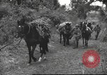 Image of Chinese troops Burma, 1943, second 37 stock footage video 65675061558