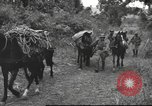 Image of Chinese troops Burma, 1943, second 38 stock footage video 65675061558