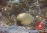 Image of United States navy diver Atlantic Ocean, 1964, second 5 stock footage video 65675061595