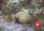Image of United States navy diver Atlantic Ocean, 1964, second 6 stock footage video 65675061595