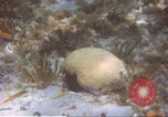 Image of United States navy diver Atlantic Ocean, 1964, second 7 stock footage video 65675061595