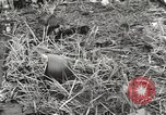 Image of United States soldiers Myitkyina Burma, 1944, second 55 stock footage video 65675061622