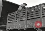 Image of United States soldiers Burma, 1944, second 47 stock footage video 65675061652