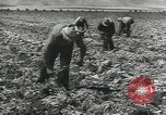 Image of United States Military units United States USA, 1956, second 39 stock footage video 65675061664