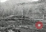Image of United States soldiers Vietnam, 1964, second 54 stock footage video 65675061701