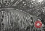 Image of 14-inch disappearing rifle at Ft. DeRussy Hawaii USA, 1941, second 55 stock footage video 65675061752