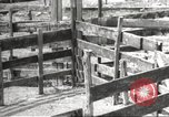 Image of Southwest Texas damage from drought Texas United States USA, 1967, second 37 stock footage video 65675061793