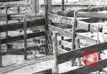 Image of Southwest Texas damage from drought Texas United States USA, 1967, second 38 stock footage video 65675061793