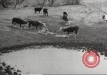 Image of Southwest Texas damage from drought Texas United States USA, 1967, second 48 stock footage video 65675061793
