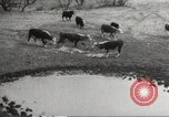 Image of Southwest Texas damage from drought Texas United States USA, 1967, second 49 stock footage video 65675061793