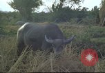 Image of water buffaloes Vietnam, 1966, second 27 stock footage video 65675062003