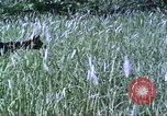 Image of scout dogs Vietnam, 1966, second 23 stock footage video 65675062005