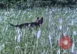 Image of scout dogs Vietnam, 1966, second 25 stock footage video 65675062005
