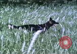 Image of scout dogs Vietnam, 1966, second 27 stock footage video 65675062005