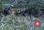 Image of scout dogs Vietnam, 1966, second 30 stock footage video 65675062005