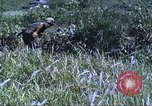 Image of scout dogs Vietnam, 1966, second 31 stock footage video 65675062005