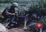 Image of scout dogs Vietnam, 1966, second 37 stock footage video 65675062005