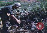 Image of scout dogs Vietnam, 1966, second 40 stock footage video 65675062005