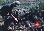 Image of scout dogs Vietnam, 1966, second 41 stock footage video 65675062005