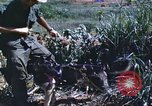 Image of scout dogs Vietnam, 1966, second 42 stock footage video 65675062005