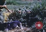 Image of scout dogs Vietnam, 1966, second 43 stock footage video 65675062005