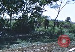 Image of scout dogs Vietnam, 1966, second 51 stock footage video 65675062005