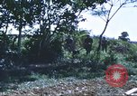 Image of scout dogs Vietnam, 1966, second 52 stock footage video 65675062005