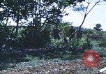 Image of scout dogs Vietnam, 1966, second 53 stock footage video 65675062005