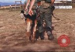 Image of sentry dogs South Vietnam, 1967, second 14 stock footage video 65675062006