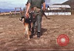 Image of sentry dogs South Vietnam, 1967, second 15 stock footage video 65675062006