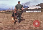 Image of sentry dogs South Vietnam, 1967, second 16 stock footage video 65675062006