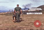 Image of sentry dogs South Vietnam, 1967, second 17 stock footage video 65675062006