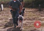 Image of sentry dogs South Vietnam, 1967, second 19 stock footage video 65675062006