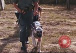 Image of sentry dogs South Vietnam, 1967, second 20 stock footage video 65675062006
